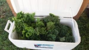 Westgate Greenmarket Kale