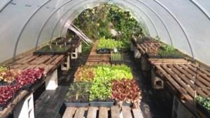 Westgate Urban Farm Greenhouse