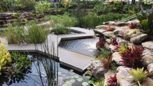 Mounts Tropical Wetland Garden