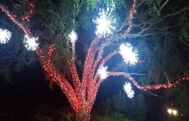 Mounts Garden of Lights 05