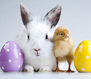 Easter Bunny with eggs and baby chick